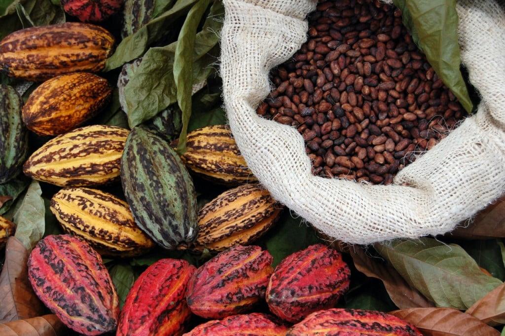 Силата на какаото